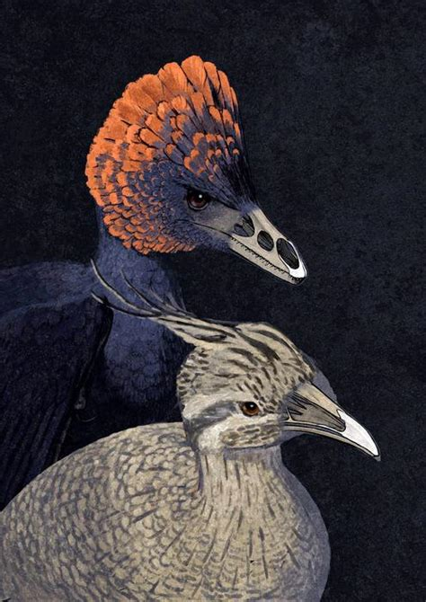 Velociraptor snouts grown on chickens in