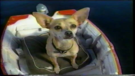Taco Bell Chihuahua Johnny Knoxville Richard Speight Jr
