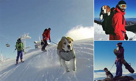 Eli the beagle pulls her owners down ski slopes in Serbia