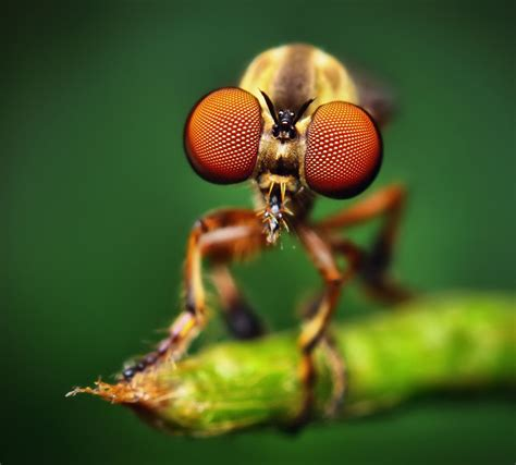 25 Most Beautiful Macro Photography examples for your